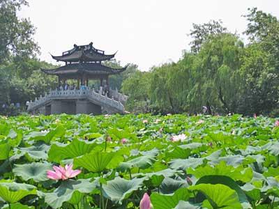杭州西湖曲院风荷